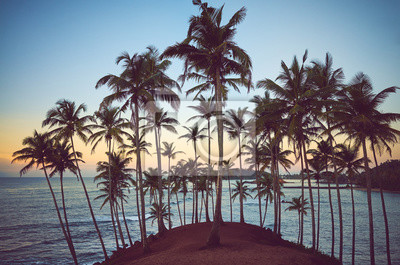 Tropical beach with coconut palm trees at sunrise, color toning applied, Sri Lanka.