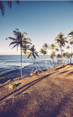 Tropical beach with coconut palm trees at sunrise, retro color toning applied.