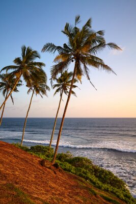 Tropical beach with coconut palm trees at sunset.