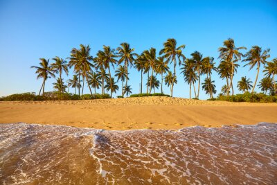 Tropical beach with coconut palm trees at sunset, Sri Lanka.