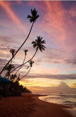 Tropical beach with coconut palm trees silhouettes at purple sunrise, Sri Lanka.