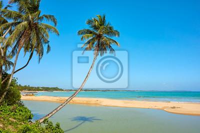 Tropical beach with coconut palm trees, Sri Lanka.