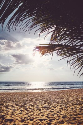 Tropical beach with palm tree leaves at sunset, color toning applied.