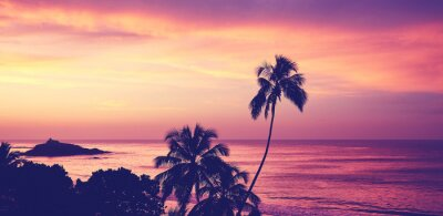 Tropical beach with palm tree silhouettes at sunrise, color toning applied, Sri Lanka.