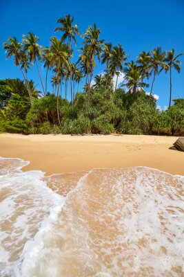 Tropical beach with palm trees on a sunny day.