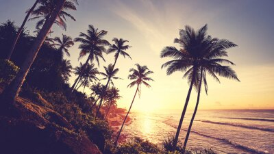 Tropical beach with palm trees silhouettes at sunset, color toning applied.