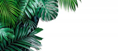 Obraz Tropical leaves banner on white background with copy space