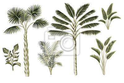 Obraz Tropical vintage palm trees, plants floral clip art. Exotic botanical set.