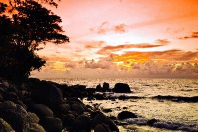 Tropikalna kolorowe słońca .
