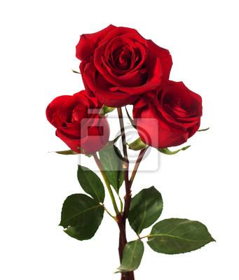 trzy ciemne czerwone róże na białym tle