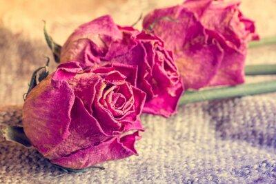 Obraz Trzy stare róże na wory tle