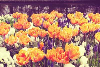 Obraz Tulipani
