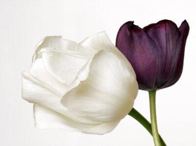 Obraz Tulipany 2
