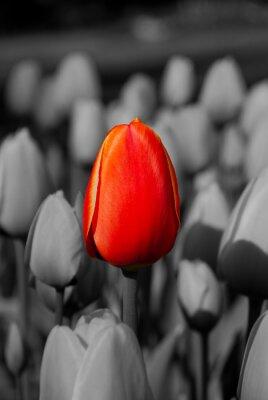 Obraz Tulipany 3