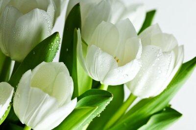 Obraz Tulipany 5