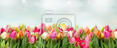 Obraz tulipany w ogrodzie na tle baner szeroki błękitne niebo