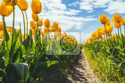 Obraz Tulips