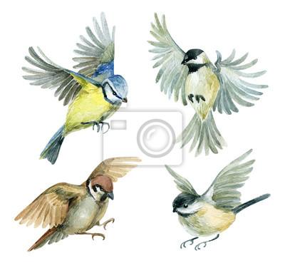 ustawić latające ptaki