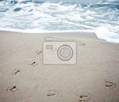 Obraz Utworów ptaków w piasku na plaży.