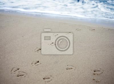 Utworów ptaków w piasku na plaży.
