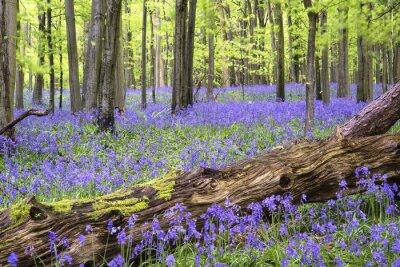 Obraz Vibrant dywan błękitna Spring landscape las
