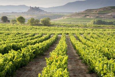 Obraz Vinedo, San Vicente de la Sonsierra al Fondo, La Rioja