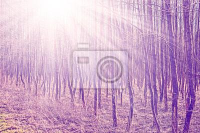Vintage filtrowane zdjęcie drzew z Sun belki.