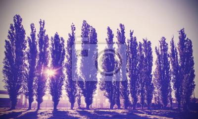 Vintage filtrowany obraz drzew w rzędzie.