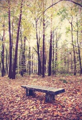 Vintage filtrowany obraz ławce w lesie.