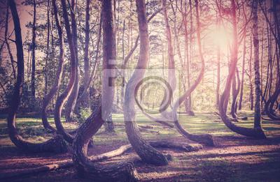 Vintage filtrowany obraz słońca w tajemniczym lesie.