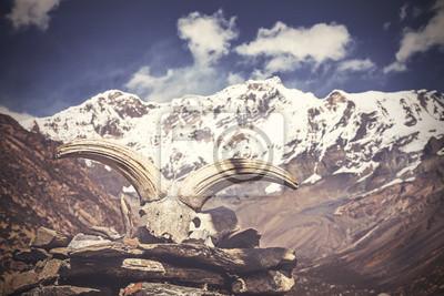 Vintage obraz czaszki, jaka jest z gór Himalajów.