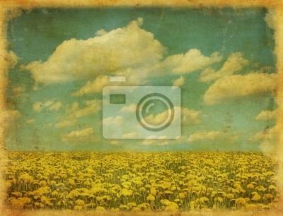 vintage obraz dandelion dziedzinie