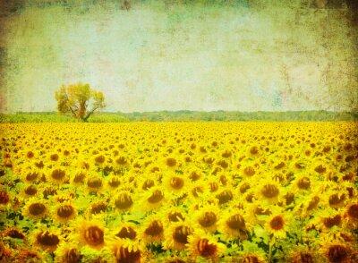 Obraz vintage obraz pola słoneczników
