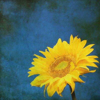 Obraz vintage obraz słonecznika na tle grunge