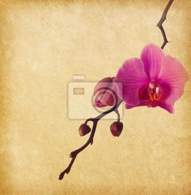 vintage papier z orchidei