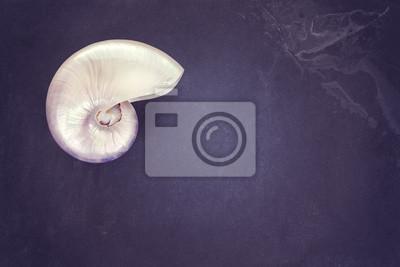 Vintage stonowanych pearl powłoki nautilus na ciemnym tle łupek, miejsca kopiowania.