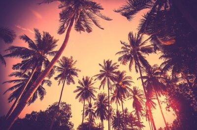 Vintage stonowanych sylwetki palmy o zachodzie słońca.