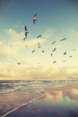 Vintage stylizowane ptaki latające nad plaży o zachodzie słońca.