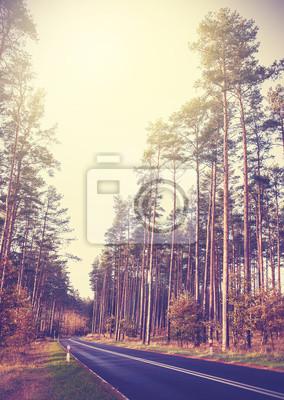Vintage stylu retro obraz drogi w lesie.