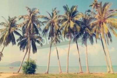 Obraz Vintage tropical palm trees on a beach