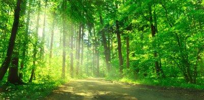 Obraz Waldweg mit Sonnenschein