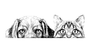 Obraz Wall sticker. Graphic, artistic, sketch drawing of a cat and a dog looking at a table on a white background.