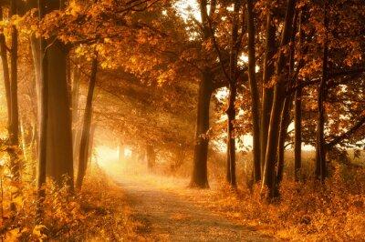 Obraz Wanderweg w goldener Herbstsonne und Nebel