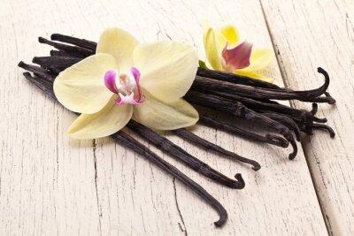 Obraz Wanilia sztyfty z kwiatem.