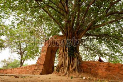 Obraz Wat Phra Ngam (opuszczony) Ayutthaya Gate of Time Arch jest otoczony przez pho.