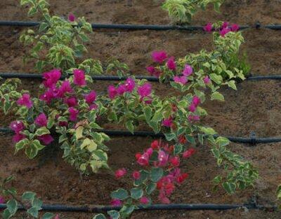 Obraz water hose line for garden
