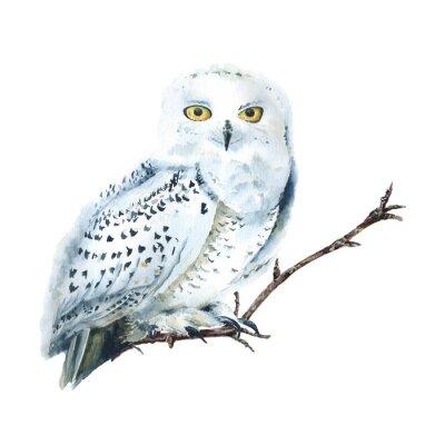 Obraz Watercolor white polar owl isolated, Arctic bird. North fauna Illustration. Poster, wall-art. Scandinavian style. Winter prints.