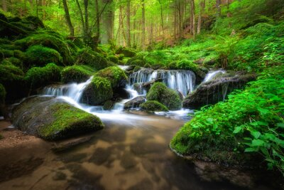 Obraz waterfall in the woods
