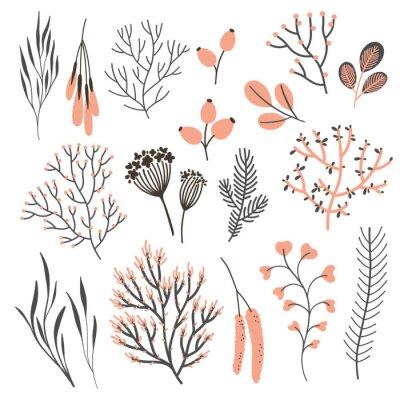 Wektoru witn spadek rośliny ustawiają na bielu. Elementy kwiatowe: gałęzie, liście, owoce, nasiona i jagody. Naturalny design. Jesienny nastrój.
