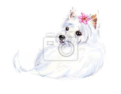 Obraz West Highland Terrier. Portret mały pies. Akwarele ręcznie rysowane ilustracji